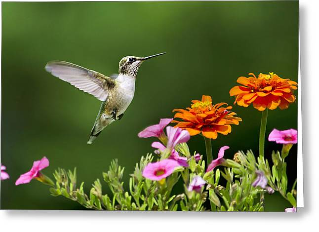 Hovering Greeting Cards - Hummingbird Flying With Colorful Flowers Greeting Card by Christina Rollo