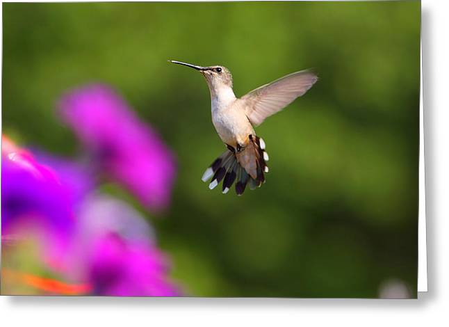 Fuad Azmat Greeting Cards - Hummingbird Greeting Card by Fuad Azmat