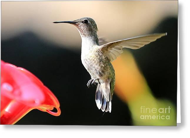 Wildlife In Gardens Greeting Cards - Hummingbird Happiness Greeting Card by Carol Groenen