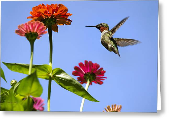 Hovering Greeting Cards - Hummingbird Happiness Greeting Card by Christina Rollo