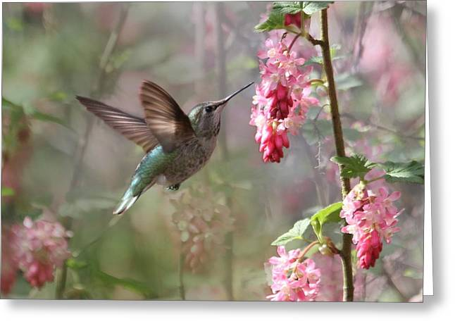 Hummingbird Heaven Greeting Card by Angie Vogel