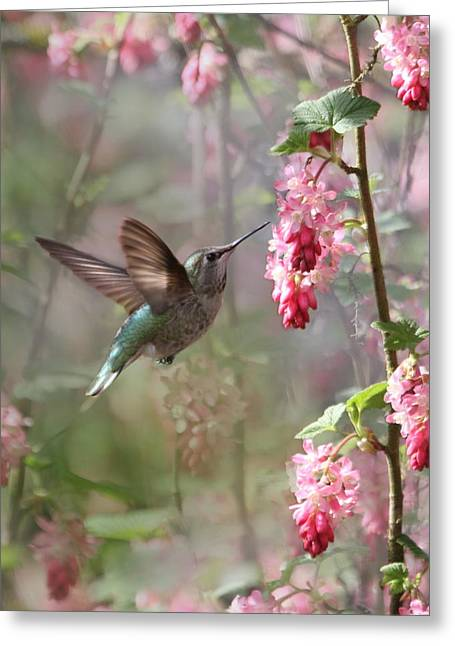 Hovering Greeting Cards - Hummingbird Heaven Greeting Card by Angie Vogel