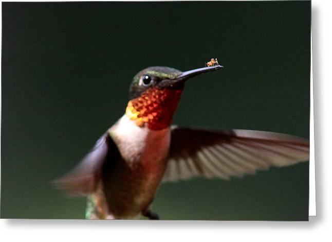 Hummingbird - Hitching A Ride - Ruby-throated Hummingbird Greeting Card by Travis Truelove