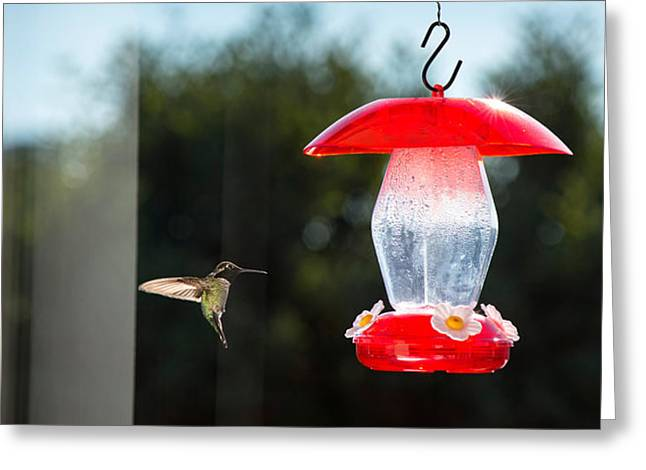 Hovering Greeting Cards - Hummingbird Hovering At Bird Feeder Greeting Card by Panoramic Images