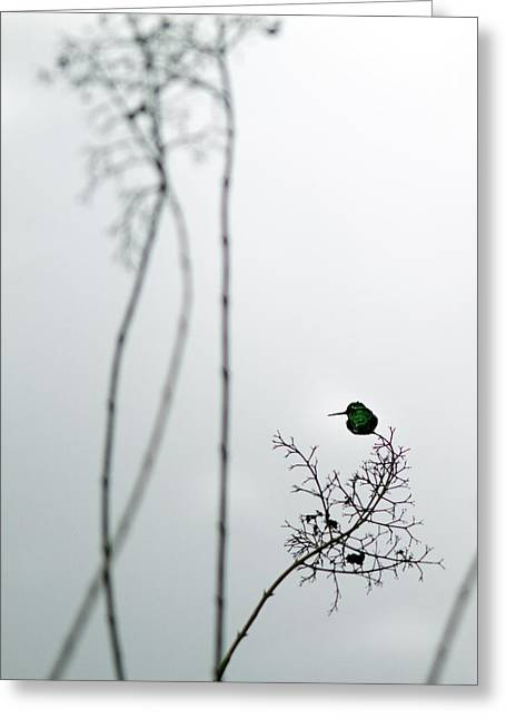 Hummingbirds Greeting Cards - Hummingbird in Fog 2 Greeting Card by Rebecca Cozart