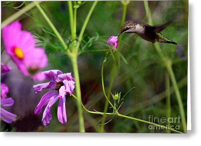 Coppery Greeting Cards - Hummingbird in Garden Greeting Card by Karen Adams