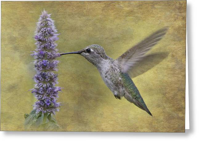 Hovering Greeting Cards - Hummingbird in the Mint Greeting Card by Angie Vogel