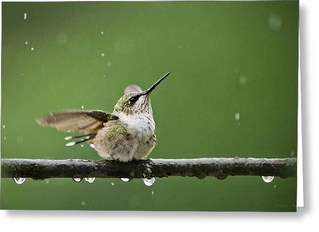 Ruby Throated Hummingbird Greeting Cards - Hummingbird In The Rain Greeting Card by Christina Rollo