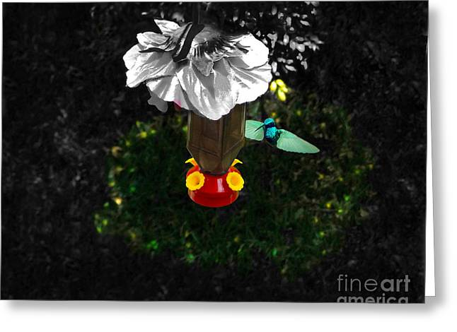 Swooping Greeting Cards - Hummingbird In The Spotlight Greeting Card by Al Bourassa
