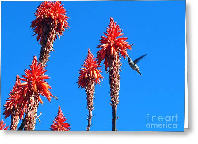 Fearlessness Greeting Cards - Hummingbird Greeting Card by Kelly Holm