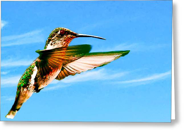 South For The Winter Greeting Cards - Hummingbird Lodi California Greeting Card by  Bob and Nadine Johnston