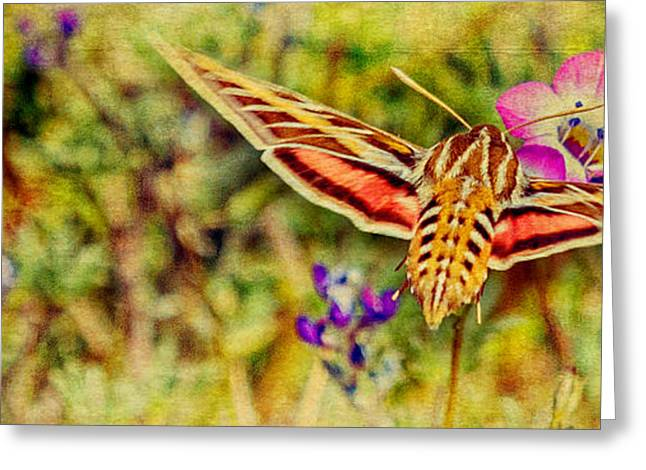 Hovering Greeting Cards - Hummingbird Moth in Wildflowers Greeting Card by Pam Vick