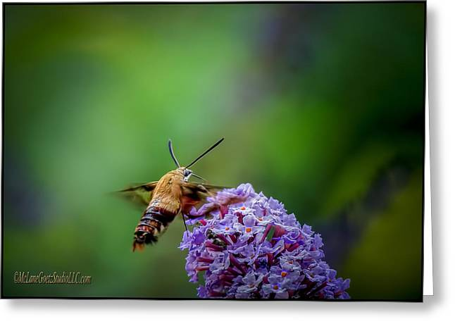 Nature Center Pond Greeting Cards - Hummingbird Moth Greeting Card by LeeAnn McLaneGoetz McLaneGoetzStudioLLCcom