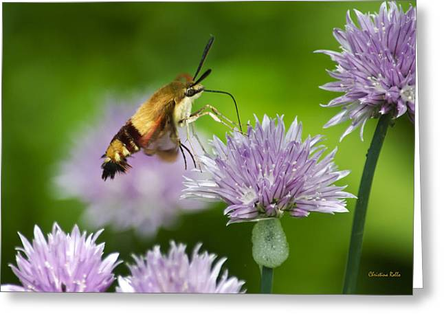 Butterfly In Flight Greeting Cards - Hummingbird Moth on Purple Chive Flowers Greeting Card by Christina Rollo
