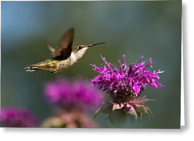 Flying Animal Greeting Cards - Hummingbird Moving Along Greeting Card by Christina Rollo