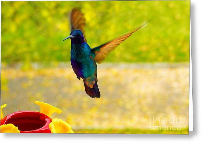 Flyer Greeting Cards - Hummingbird Oil Painting Greeting Card by Al Bourassa
