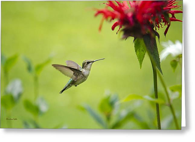 Hovering Greeting Cards - Hummingbird Paradise Greeting Card by Christina Rollo