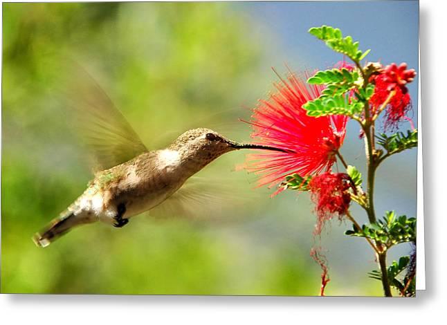 Paul Van Baardwijk Greeting Cards - Hummingbird Greeting Card by Paul Van Baardwijk