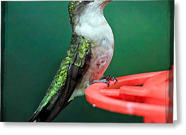 Florescent Lighting Greeting Cards - Hummingbird Perched On Feeder Greeting Card by Geraldine Scull