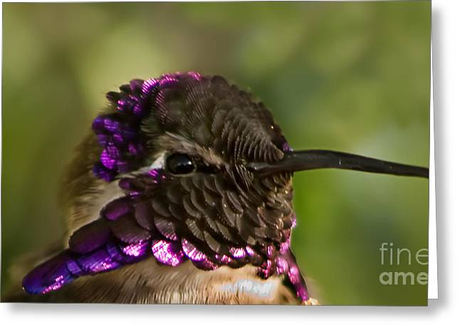 Hummingbird Portrait Greeting Card by Robert Bales