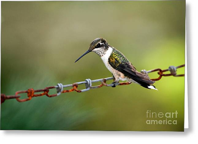 Alabama Greeting Cards - Hummingbird Resting on a Chain Greeting Card by Sabrina L Ryan