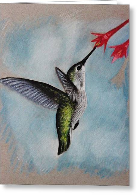 Photorealism Pastels Greeting Cards - Hummingbird Greeting Card by Samantha Howell