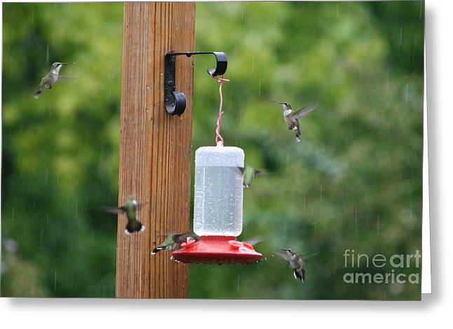 Migrating Hummingbird Greeting Cards - Hummingbird Shower Greeting Card by Connie Mueller