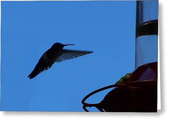 Manitou Springs Greeting Cards - Hummingbird Silhouette  Greeting Card by Chris Flees