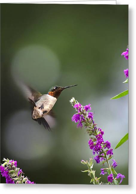 Playful Animals Greeting Cards - Hummingbird Somersault Greeting Card by Christina Rollo
