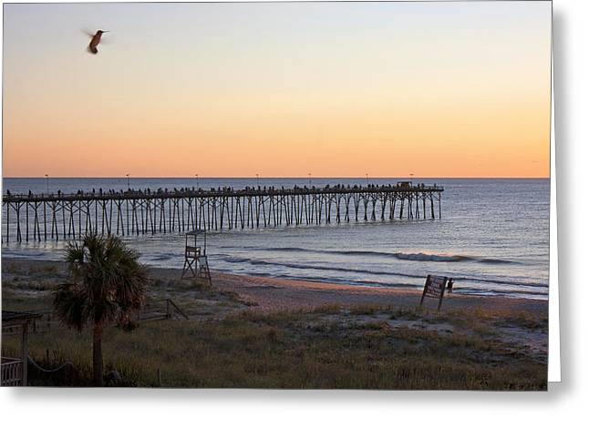 Fishermans Island Greeting Cards - Hummingbird Sunrise Greeting Card by Betsy C  Knapp