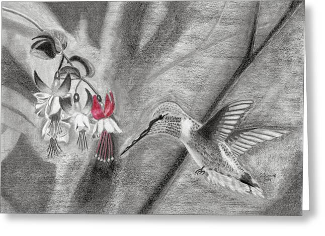 Susan Schmitz Greeting Cards - Hummingbird Greeting Card by Susan Schmitz
