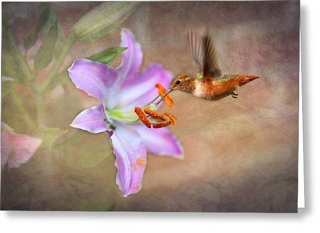 Stamen Digital Art Greeting Cards - Hummingbird Sweets Greeting Card by Mary Timman