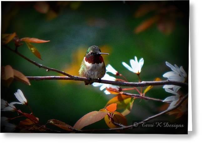 Terri K Designs Greeting Cards - Hummingbird Greeting Card by Terri K Designs
