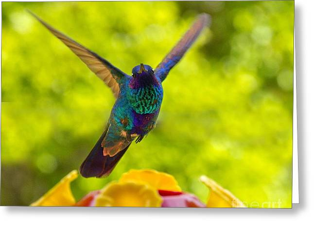 Hovering Greeting Cards - Hummingbird Winging Away Greeting Card by Al Bourassa