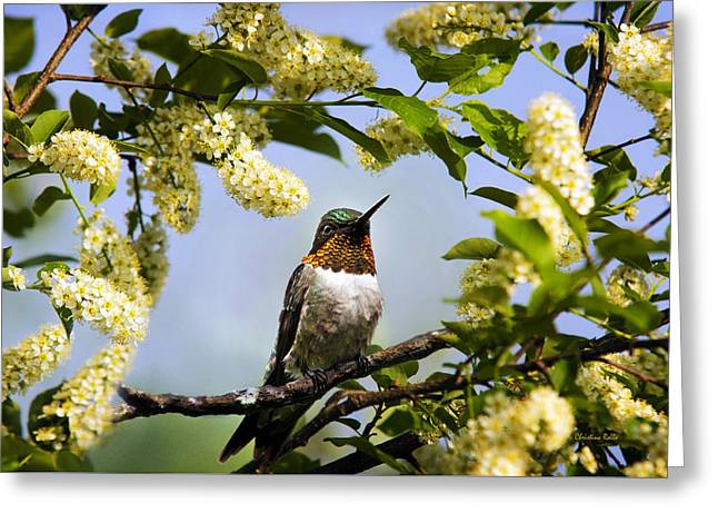 Archilochus Colubris Greeting Cards - Hummingbird with Flowers Greeting Card by Christina Rollo