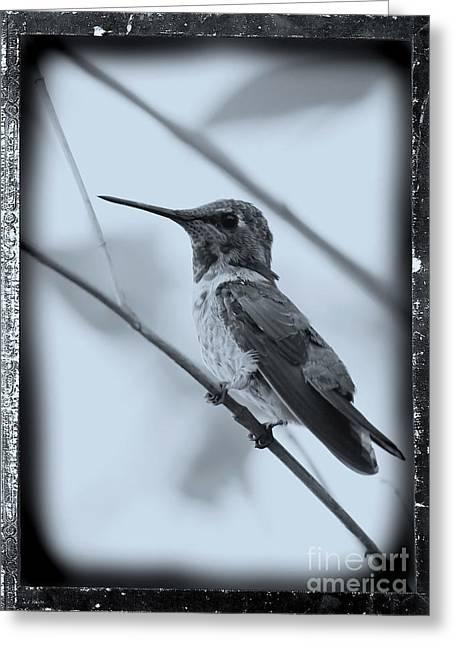 Carol Groenen Digital Art Greeting Cards - Hummingbird with Old-Fashioned Frame 1 Greeting Card by Carol Groenen