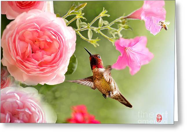 Flying Animal Pastels Greeting Cards - Hummingbird with Rose Greeting Card by Rose Zhou
