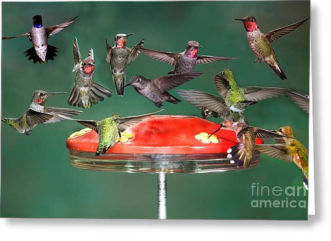 Flying Animal Greeting Cards - Hummingbirds Greeting Card by Anthony Mercieca
