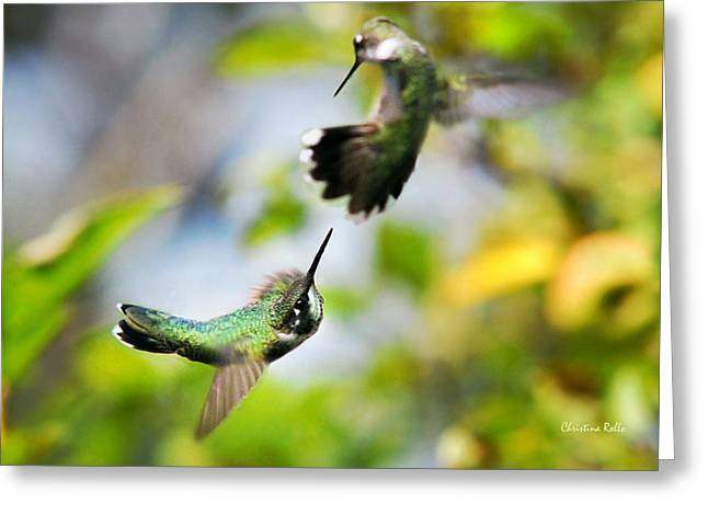 Christina Rollo Greeting Cards - Hummingbirds Ensuing Battle Greeting Card by Christina Rollo