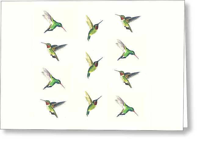 Hummingbirds Greeting Cards - Hummingbirds Number 2 Greeting Card by Michael Vigliotti