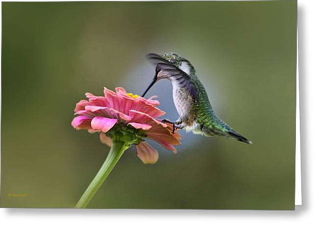 Archilochus Colubris Greeting Cards - Hummingbirds Pure Goodness Greeting Card by Christina Rollo