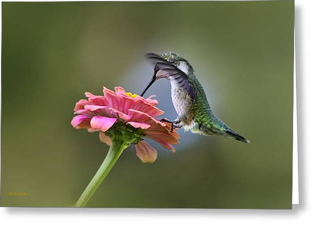 Hummingbirds Pure Goodness Greeting Card by Christina Rollo