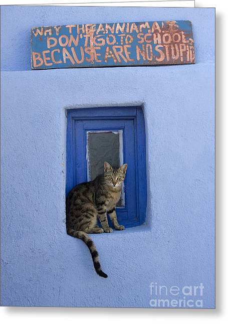 Gray Hair Greeting Cards - Humorous Cat Sign Greeting Card by Jean-Louis Klein and Marie-Luce Hubert