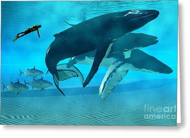 Sea Creature Pictures Greeting Cards - Humpback Dive Greeting Card by Corey Ford