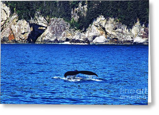 Humpback Greeting Cards - Humpback Whale Alaska Greeting Card by Thomas R Fletcher