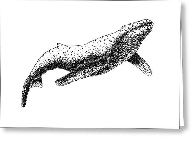Whale Drawings Greeting Cards - Humpback Whale - Black and White Greeting Card by Michael Vigliotti
