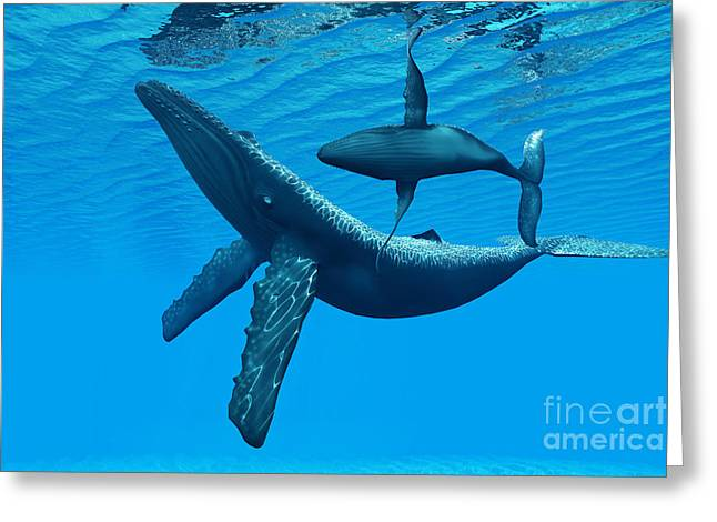 Sea Creature Pictures Greeting Cards - Humpback Whale Bonding Greeting Card by Corey Ford