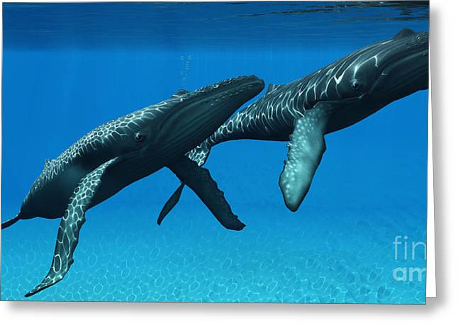 Sea Creature Pictures Greeting Cards - Humpback Whales Surfacing Greeting Card by Corey Ford