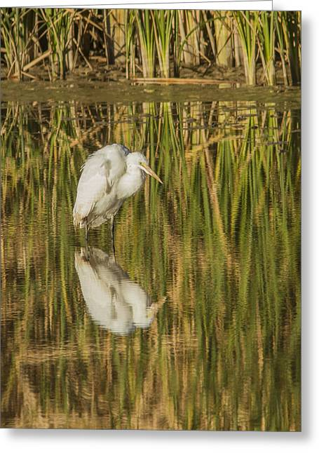 Wildlife Refuge. Greeting Cards - Hunched up White Heron Greeting Card by Jean Noren