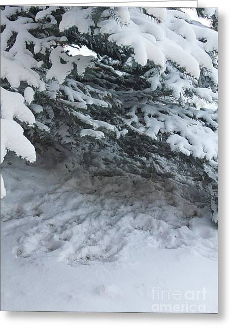 Evergreen With Snow Greeting Cards - Hungarian Partridge Resting Place Greeting Card by Donna Munro